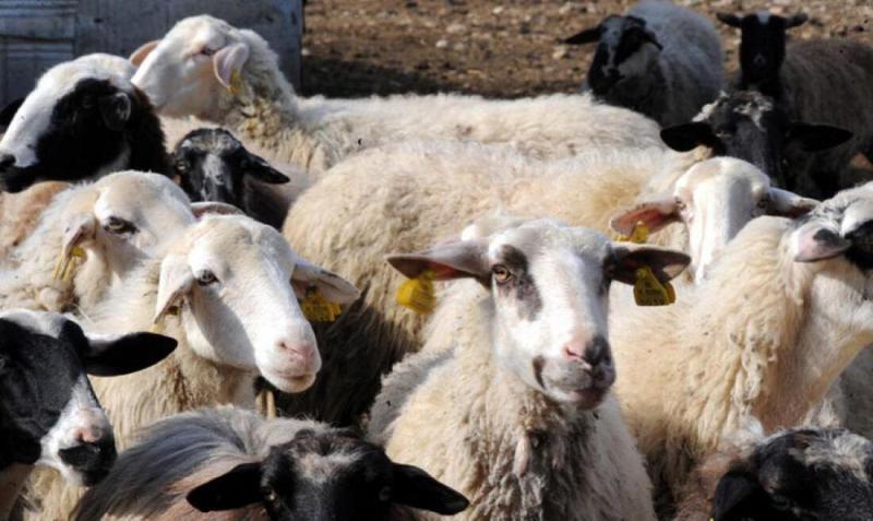 Παρέμβαση για τη χορήγηση της συνδεδεμένης ενίσχυσης ζητά η «Ένωση Αγροτών»