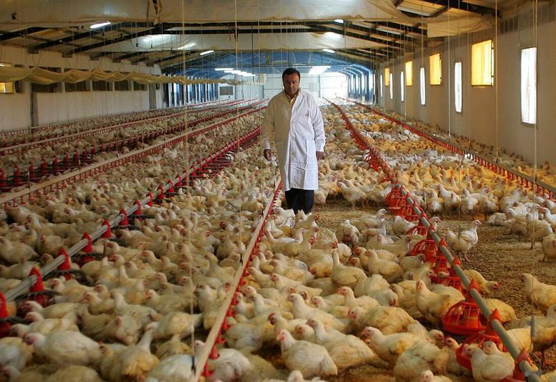 Μέτρα για την ενίσχυση της πτηνοτροφίας ζητούν 30 βουλευτές του ΣΥΡΙΖΑ