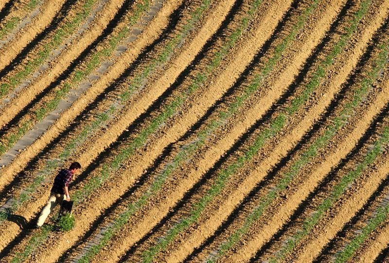 Ελληνική γεωργία: η μόνη (τελικά) σταθερή αξία