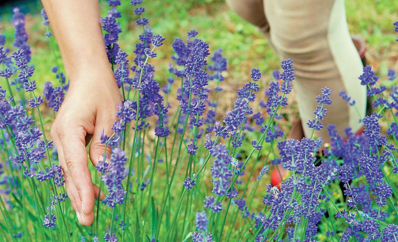 Διαδικτυακά σεμινάρια για τα αρωματικά και φαρμακευτικά φυτά