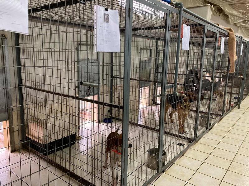 Κάλεσμα για υιοθεσία αδέσποτων από τον δήμο Ιωαννιτών
