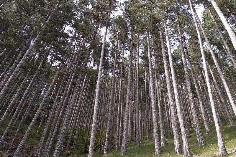«Όχι άλλα δέντρα» η απάντηση των Δασαρχείων