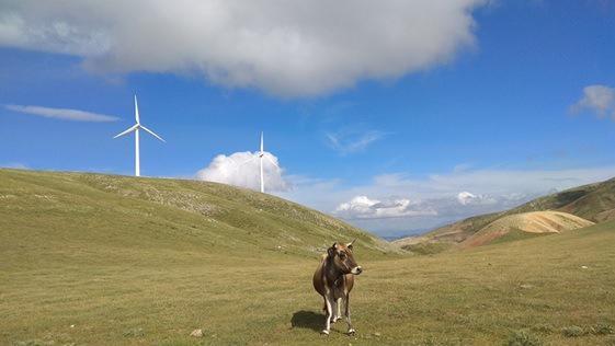 Gaiacomm: Τα αιολικά πάρκα της σύμμαχος της κτηνοτροφίας